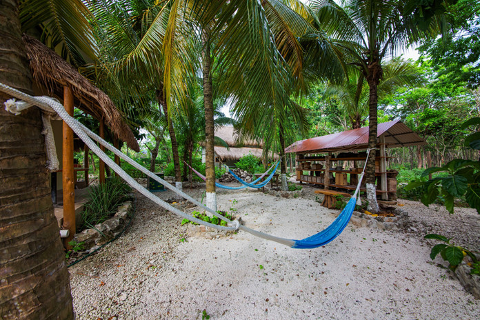 9. Hammocks, Coconuts, Stingless Bee Sanctuary.jpg