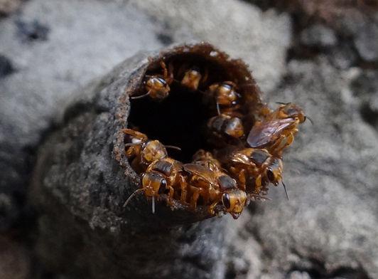 colmena-abejas-1.jpg