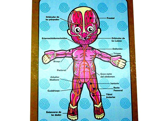 Esquema corporal sistema muscular