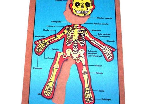 Esquema corporal sistema oseo