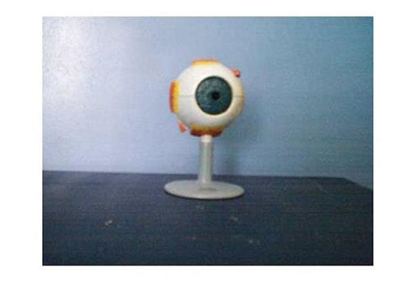 Mini modelo corte del ojo
