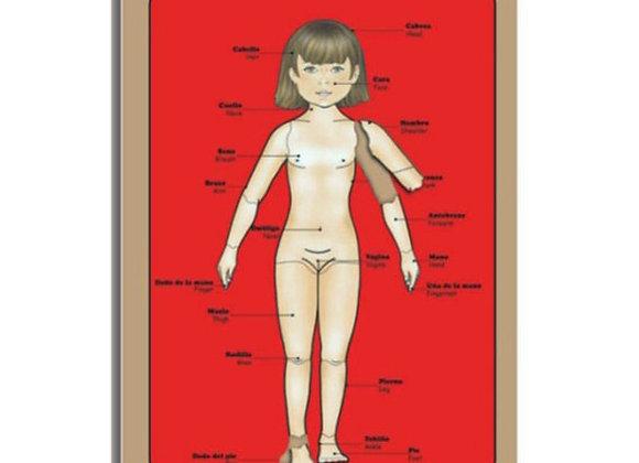 Esquema corporal articulado niña