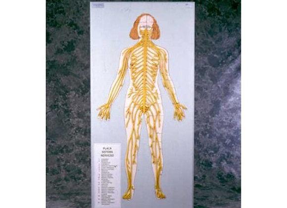 Placa sistema nervioso