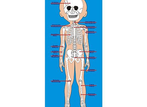 Esquema corporal niño sistema oseo
