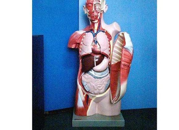 Torso humano con tapa en el tórax