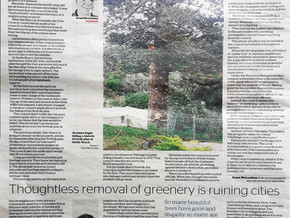 Protected trees are falling to council incompetence