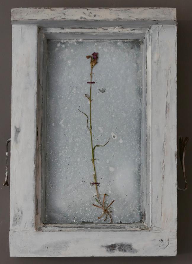 Olcio per Noi (1), mixed media with dry flower, 60x26cms, 2017