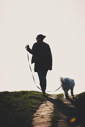 Dog Walking in Edenbridge