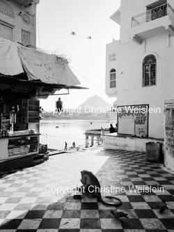 18.11.2013 Pushkar Tempel SW5 5879 CR_1.