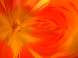Flower 1819.JPG