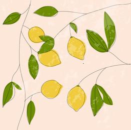 Lemon Doodle-01.jpg