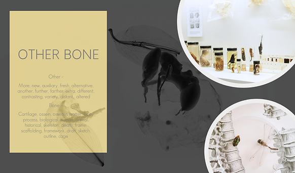 otherbone.png