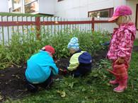 Porkkanannostoa vai matojen etsintää