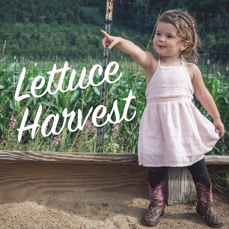 Farm Tots: Lettuce Harvest