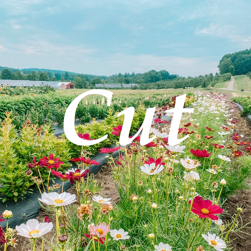 Cut-Your-Own Flowers - Opening Day! (WEAR BOOTS)