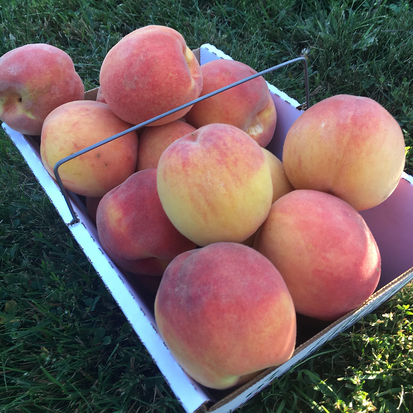 Pick Your Own Peaches, Saturday 8/1
