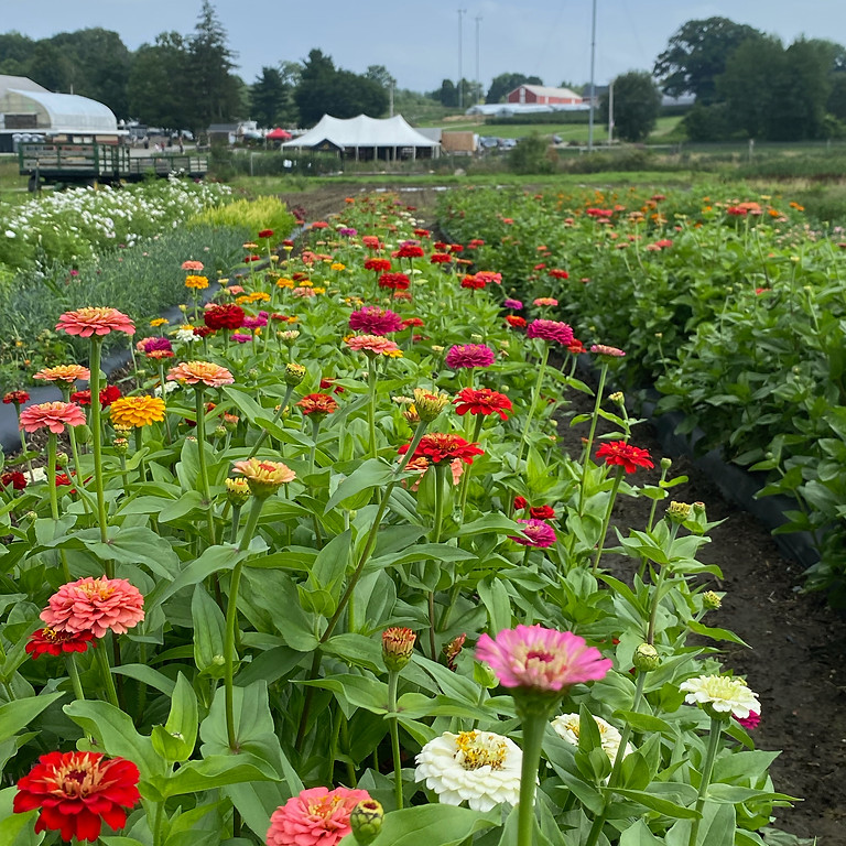 EXTENDED HOURS: Cut-Your-Own Flowers - 8/6