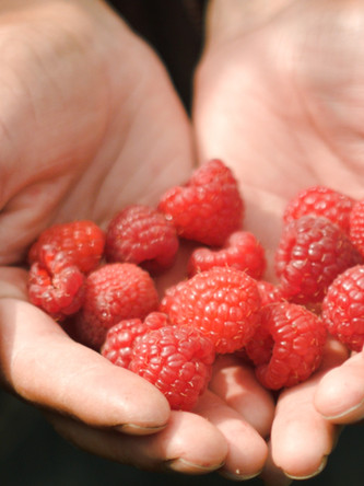 Raspberries_1.10.1.jpg