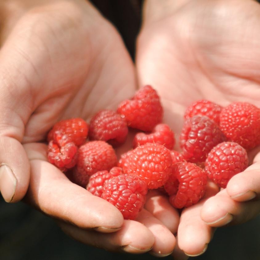 Pick Your Own Raspberries, Sunday 7/19