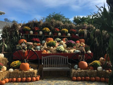 Harvest News From Farmer Glenn