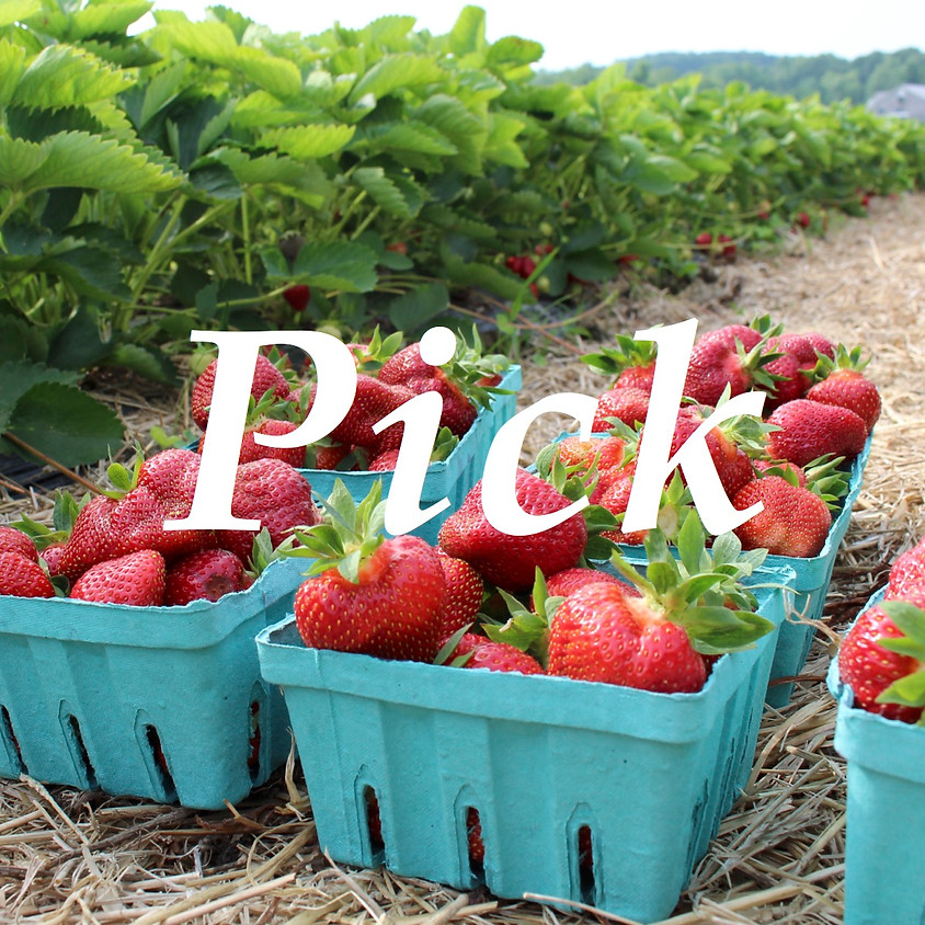 SOLD OUT - Pick-Your-Own Strawberries - Friday 6/25