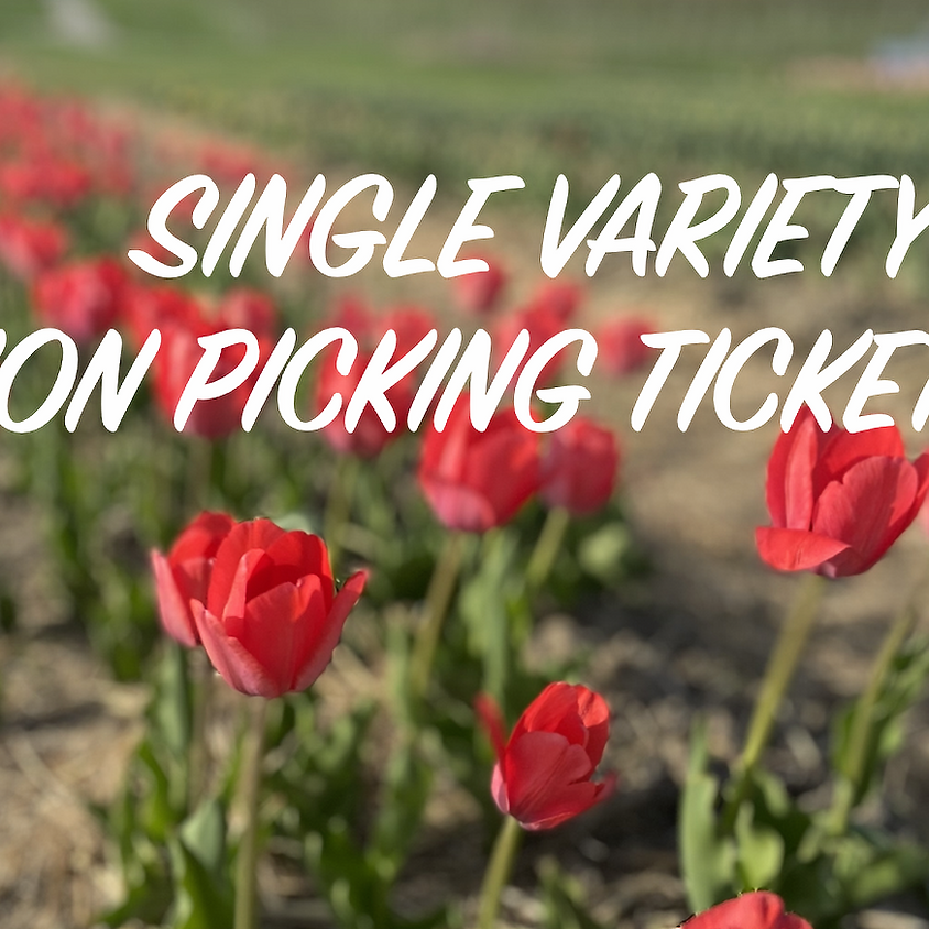 Cut-Your-Own Tulips  - SINGLE VARIETY & NON PICKER Tickets-  Monday 5/3