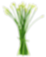 Chive-Flower.png