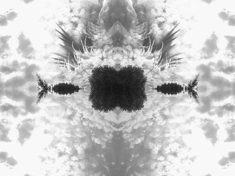 White copie_edited.jpg