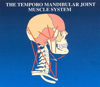 Temporo Mandibular Joint Muscle System