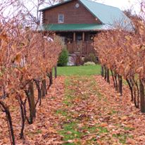 fall winery 4