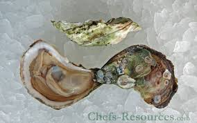 oyster malapequa