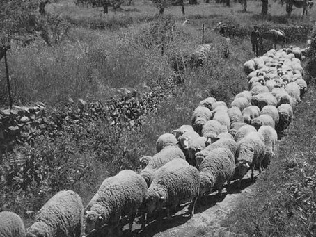 Отгонное животноводство: великий переход