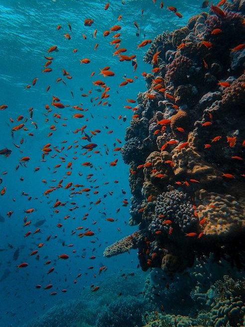 underwater-5310424_640.jpg