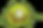 coronavirus_PNG33.png