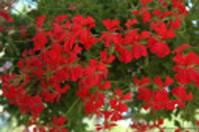 2_blommor