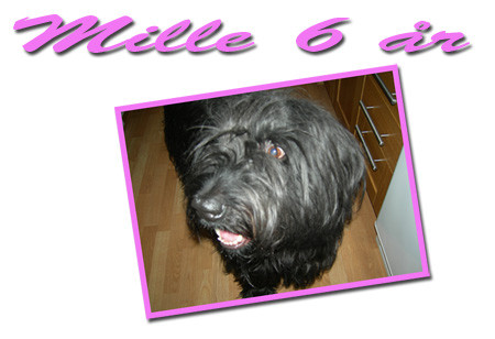 mille6