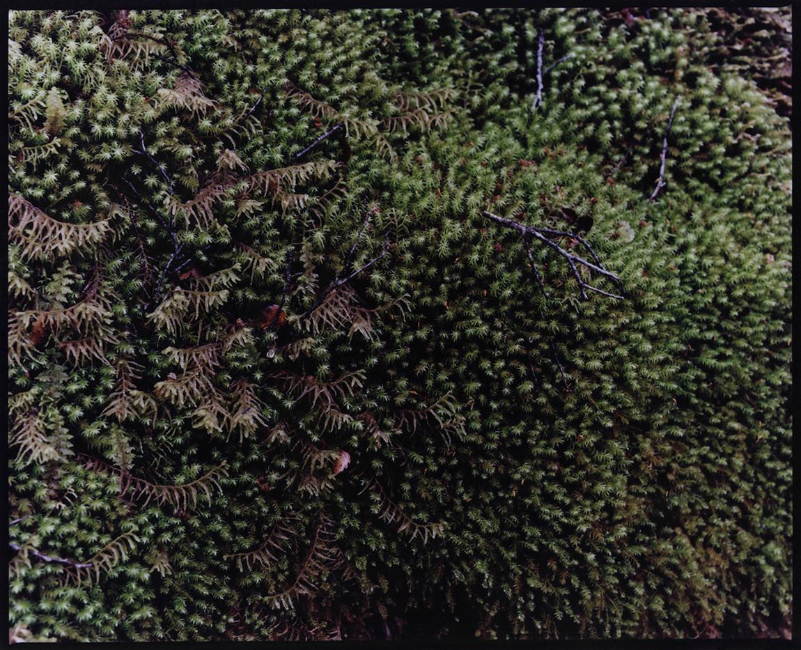 TERRA-MATER-Prune-Brenguier-02.jpg