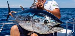 TunaStrip1