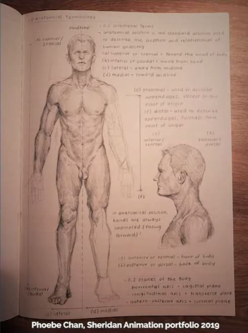 A page from Phoebe Chan's sketchbook for her Sheridan Animation portfolio (2019), showcasing the male figure