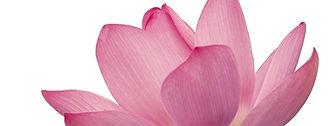 Rosa Blütenblätter