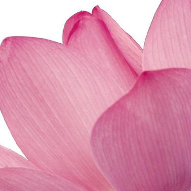 PINK FLOWER LEAF