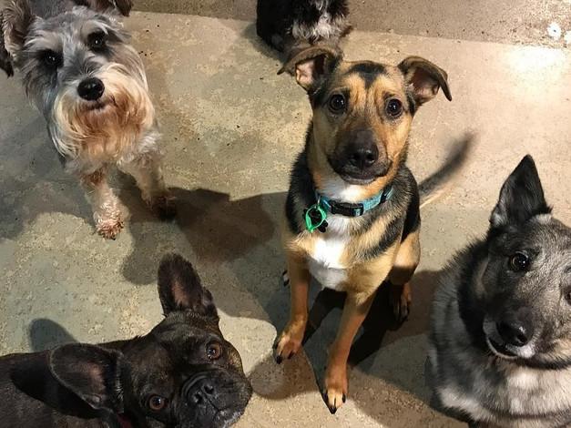 Winston, Luna, Max and Ryder