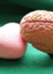 Het compassionele brein, groeibrein, gro