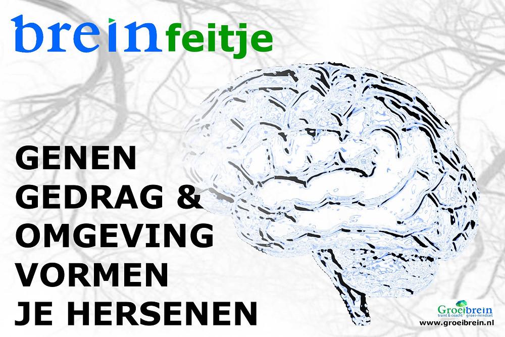 Je brein vormt je zijn en je 'zijn' vormt ook je brein. Genen, omgeving en gedrag vormen je hersenen.