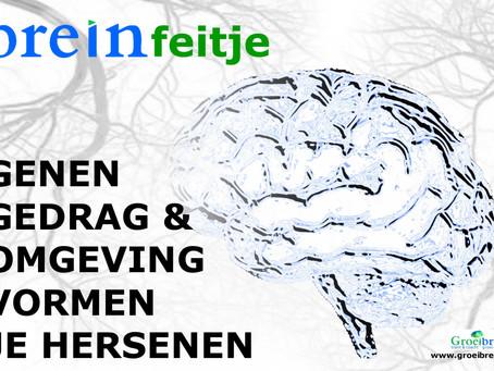 Genen, gedrag & omgeving vormen je brein