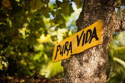 mob-pura-vida-in-tree-cabuya.jpg