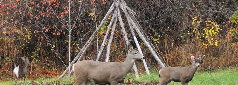 deer at the ashram
