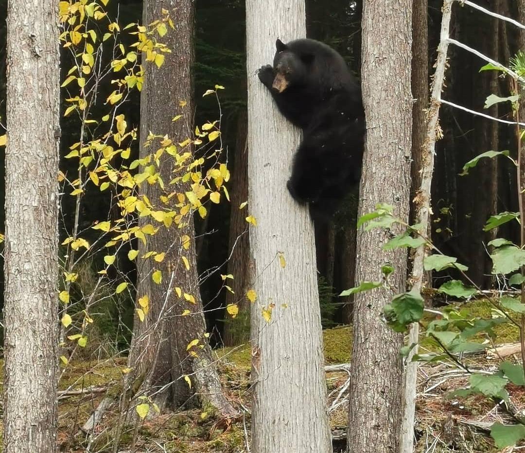 bear at bc yoga retreat