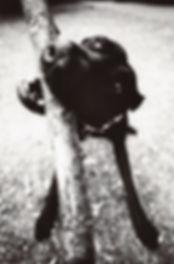 fotografie, dog, hund, stock, biss, beissen, schwarz