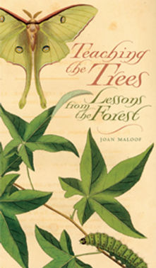 Joan Maloof: Teaching the Trees